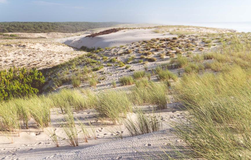Huchet-Retraite-Cote-Landaise-Dunes-Sable-Ocean